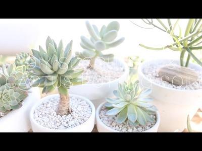 DIY Succulent & Cactus Potting Soil