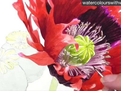 How to paint a realistic poppy centre in watercolor by Anna Mason