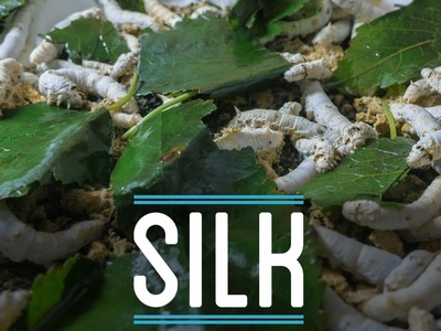 Silk   How To Make Everything: Suit (6.10)