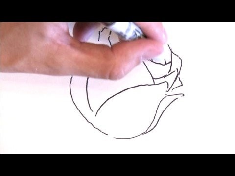 Illustration & Drawing Tips : How to Draw a Rose