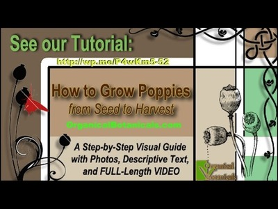 #WikiHow How to Grow Poppy Seeds | Growing Poppies from Flowers to Pods