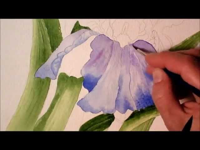 Iris in Watercolor, painting process time lapse