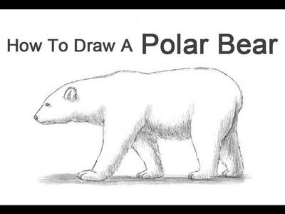 How to Draw a Polar Bear