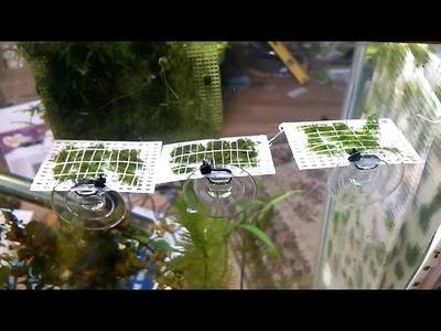 DIY: How to create a moss hanging pad AKA moss ledge, saving space & growing moss faster.