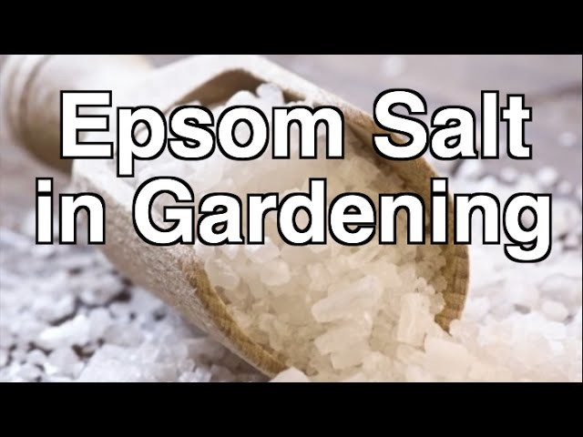 Is Epsom Salt Beneficial for Organic Gardening?
