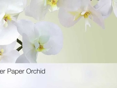 Wafer Paper Orchid - Phaleanopsis by ChokoLate (TRAILER)