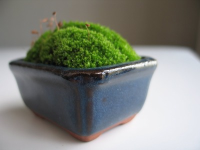 How to Make a Moss Pot: Emmymade