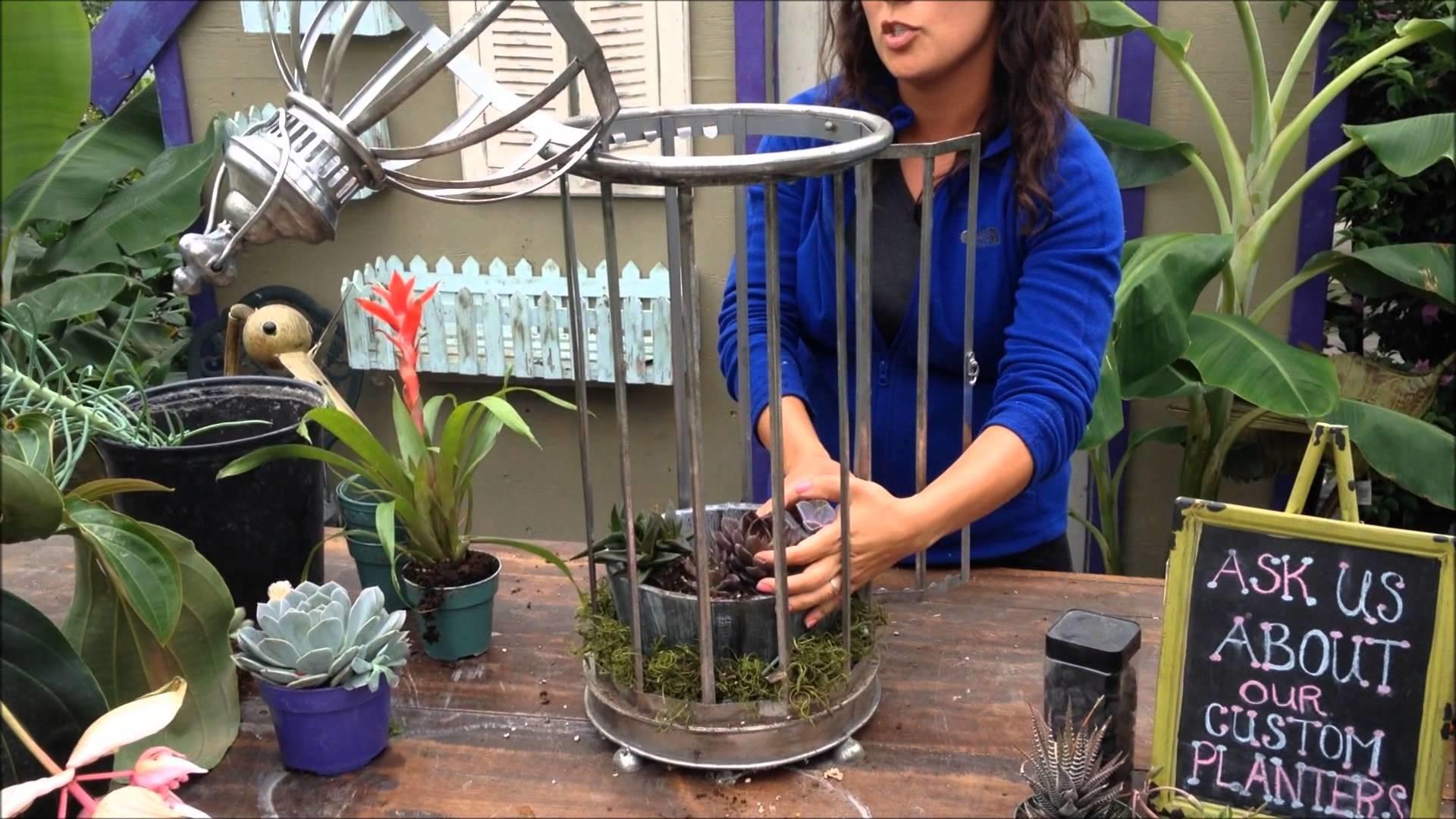 Planting a Succulent Birdcage