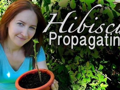 Hibiscus: DIY Propagating Hibiscus - How to Grow a Beautiful Garden with Scarlett