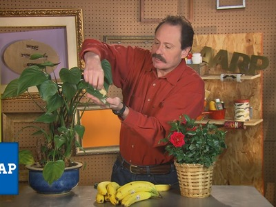 DIY: Banana Peels & Your Potted Plants | The Cheap Life| AARP