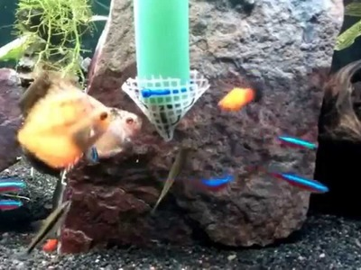 DIY feeding system.contraption for Discus in a planted aquarium tank