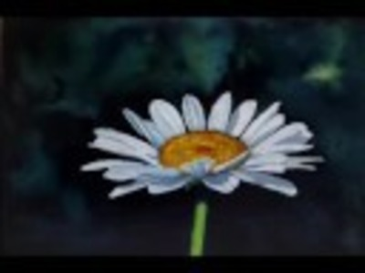 "How to Paint a white daisy flower with Watercolor Demonstration ""Lone Daisy"""