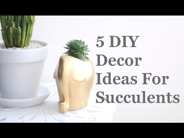 5 DIY Decor Ideas For Succulents