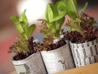 Robert's Recycled Seed Starter Pots