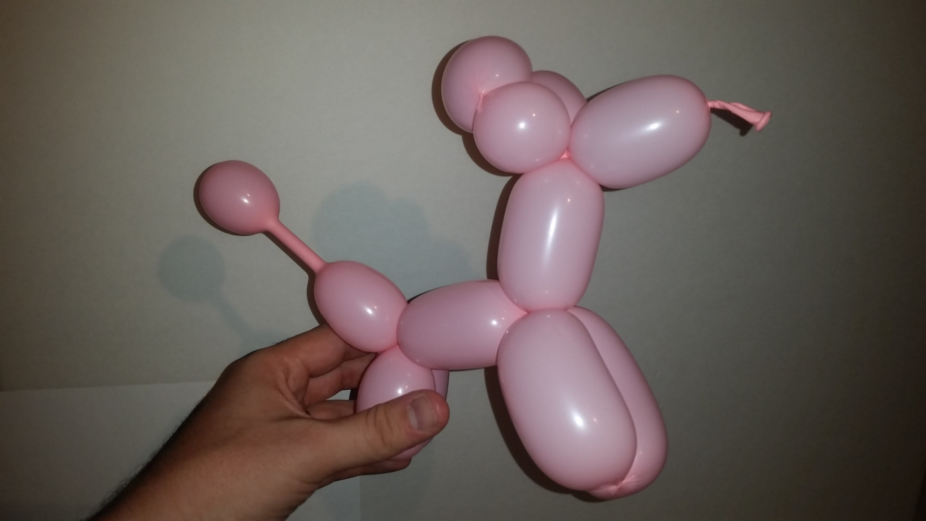 How to make a Balloon puppy dog!! DIY your own balloon dog.