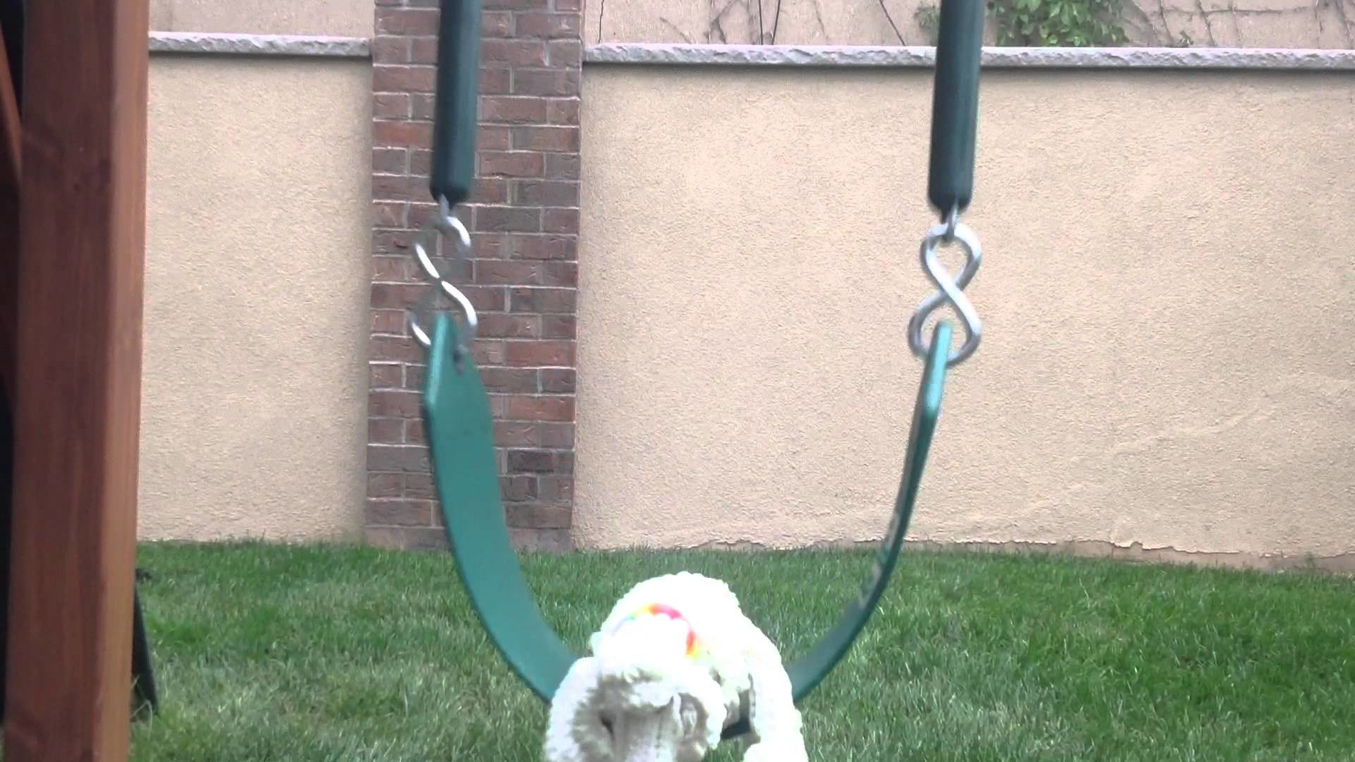 Rainbow loom dog named cookie