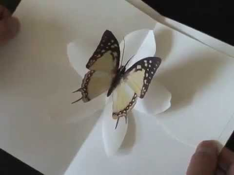 Butterfly Kisses - Kirigami Pop-up Cards
