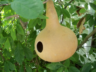 How to Attract Certain Birds to Your Gourd Birdhouse