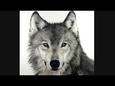 How I draw a Wolf, hyperrealistic art