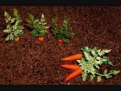 Belara Beach Miniature Vegetable Gardens