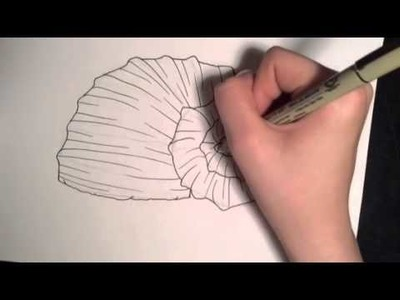 How to Draw 2 Different Seashells!!!