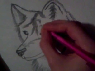 How to draw a Wolf Step by Step!