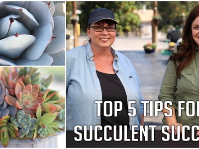 Top 5 Tips for Succulent Success