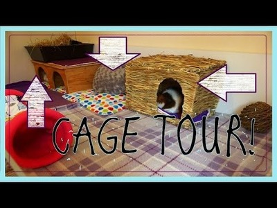 DIY GUINEA PIG CAGE: Cleaning and Cage Tour 2015!