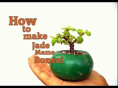 How to make jade Mame Bonsai