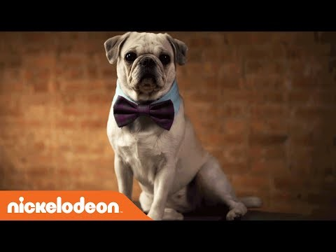 DIY Crafts | TeenNick Paw-Some Dog Collar | Nick