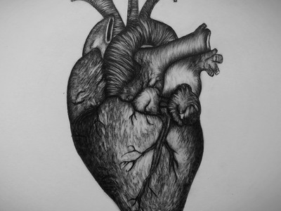 How to draw Heart step by step Real Heart Drawing