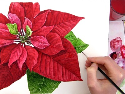 How to paint a realistic Poinsettia for your Christmas card in watercolour