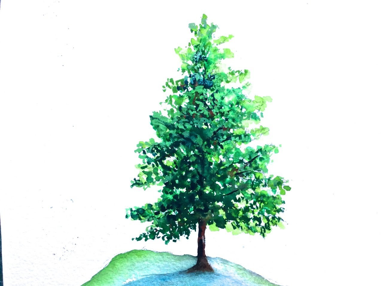 How to paint a Pine Tree with Watercolor, a Tutorial for beginners