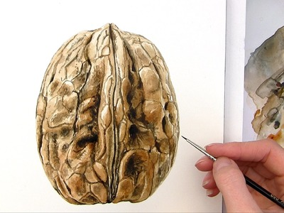 How to paint a realistic walnut in watercolor