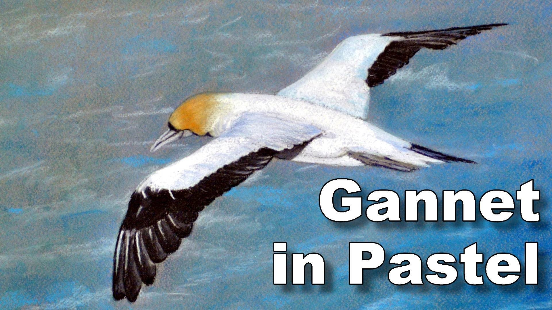 How to paint birds in pastel - gannet time lapse drawing