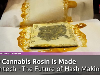 How Cannabis Rosin Tech Concentrates Are Made - Rosintech, Future of Hash Making? SmokersGuideTV USA