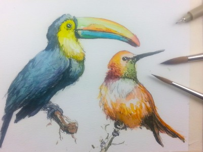 How to Draw & Paint Birds with Ink and Watercolor Part 1