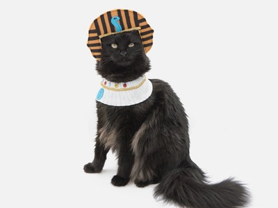 Sew a Pet Costume - Ancient Egyptian Headdress