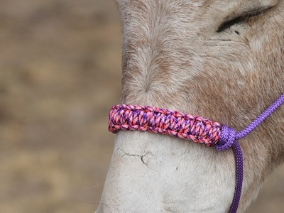 How to make a braided paracord noseband for a  horse halter.   Step by step instructions.