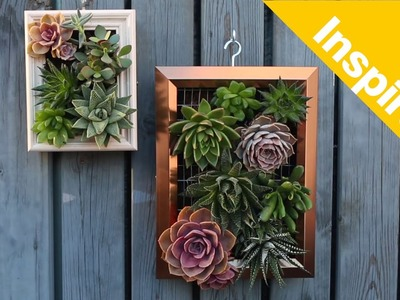How to build a living succulent picture