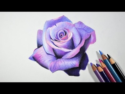 How to Draw A Lavender Rose -- Step by step tutorial -- Prismacolor pencils