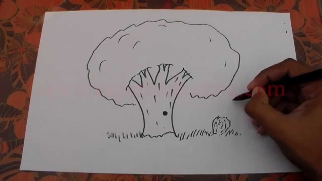 How to Draw a Tree - Dibuja un árbol - Teken een Boom