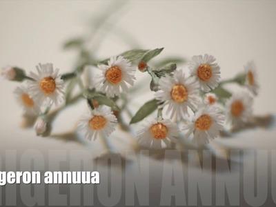 [EASY Tutorial]Wild flower_Erigeron annuus[Crepe paper flower]