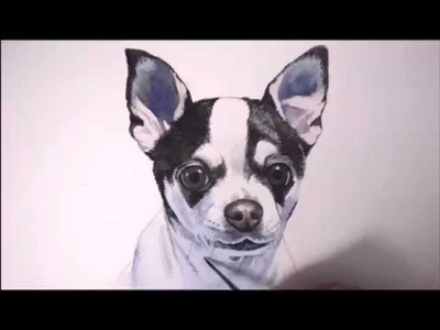 FREE Lesson. How to paint portrait of a dog, Chihuahua, time-lapse by Christopher Shellhammer