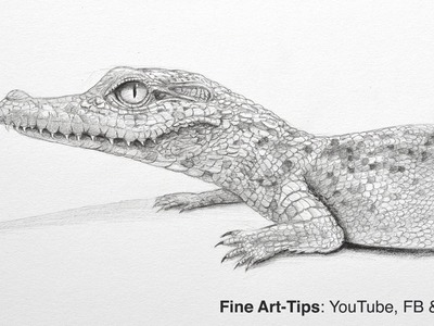 How to Draw a Baby Crocodile - or Aligator