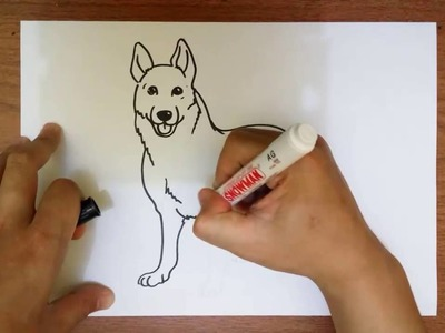 How to Draw a German Shepherd Dog Step by Step