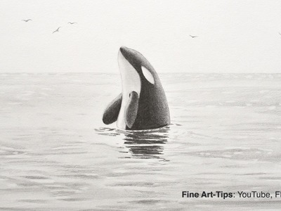 How to Draw a Killer Whale - Orca