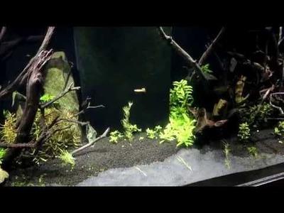 New LED Planted Aquarium Lights! DIY!