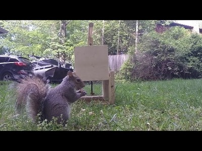 How to Make a Squirrel Trap - DIY catch alive trap