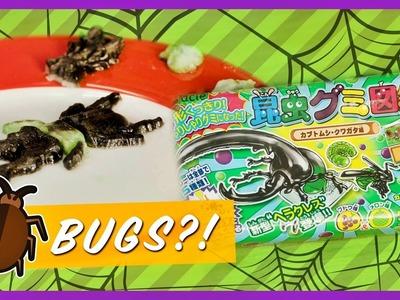 Kracie Beetle Gummy Candy Kit   Kawaii Cookin   Strawburry17